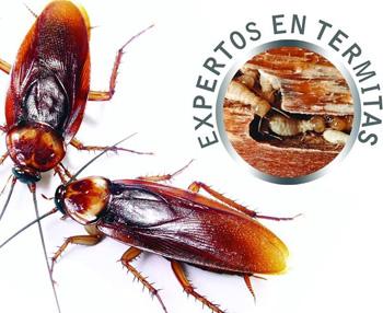 nuevo concepto nueva productos al por mayor online Tratamientos y fumigacion de termitas y ratas en Cadiz ...